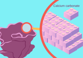 Coral building its skeleton: corals build their skeleton with building blocks of calcium carbonate